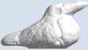 Picture of Galapagos Frigatebird