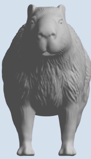 Picture of Capybara
