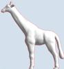 Picture of Giraffe